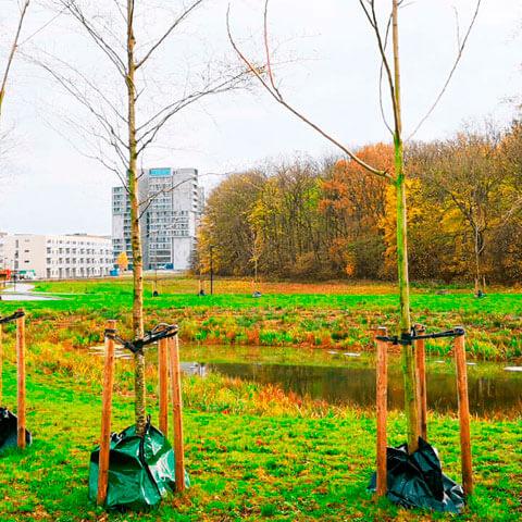 hededanmark - træer og sø